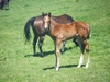 Shocking x Marley Magic filly (3 weeks)