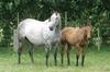 Dual Group One winner Katie Lee and Foal