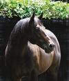 Zabeel: Profile of a Champion Sire