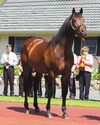 Zabeel: Centre of Attention