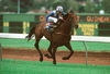 Zabeel: Group One Race Horse