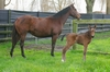 First foal for the season