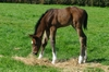Thewayyouare - Ziva bay colt.  Born 17 August 2015  (4 days old)