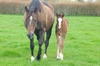 Cape Blanco - Diamonds Forever bay colt, born 27 August (14 days old)