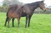 Tavistock - Quest for Kash bay filly, born 2 September (7 days old)