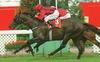 Don Eduardo. Gr. 1 Derby Winner