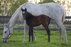 Road To Rock/Pentina filly 12/10/2017