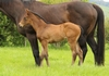 Road To Rock/Stunning Princess filly 24/10/2017