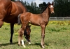 Road To Rock/Toothpic colt 8/11/2017
