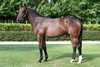 Lot 429 Holy Roman Emperor/Negative Nelly colt