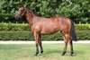 Lot 437 Toronado/Northeast Note filly