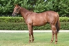Lot 672 Shooting To Win/Turf CutterGirl colt