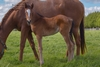 Turn Me Loose/Rose and Crown filly 20/9/2018