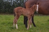 Vespa/Bonney Pepper colt 18/10/2018